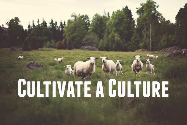 Cultivate a Culture